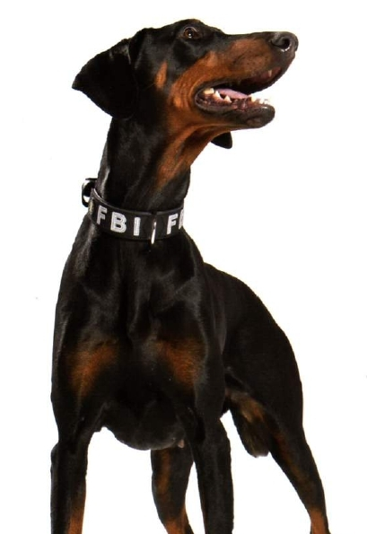 Hunter Collar Fbi Www Dog Shop Org