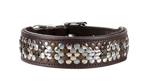 Hunter Halsband Arizona