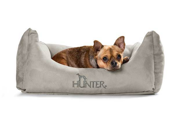 Hunter_dogsofa_Vicenza_61935_image_15