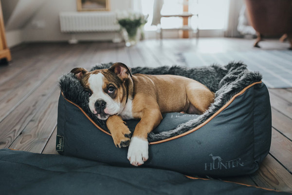 hunter_dog_sofa_bergamo_65337_bulldog_5
