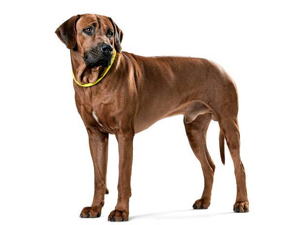 61700_hunter_training_collar_freestyle_yellow